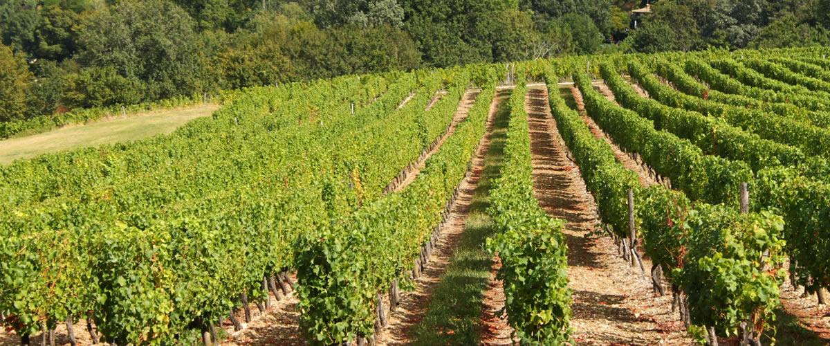 local vineyards Monpazier